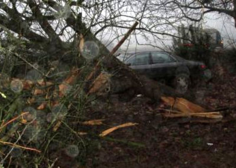 by: OREGON STATE POLICE - An Oregon City man was cited for DUII after it was determined that he had crashed his car into several trees near the French Prairie rest area.