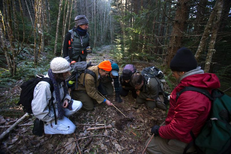 by: PHOTO BY JON HOUSE - Animal trackers from Cascadia Wild inspect a scrape on a trail and make notations saying that they believe to be either a bobcat or cougar in the Mount Hood Nartional Forest.