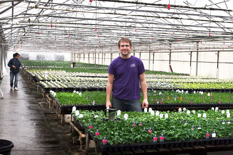by: OUTLOOK PHOTO: JIM CLARK - Tim Fidanzo, manager of Al's Garden Center in Gresham, stands in one of the greenhouses nurturing geranium starts that will supply all three of the company's retail outlets.
