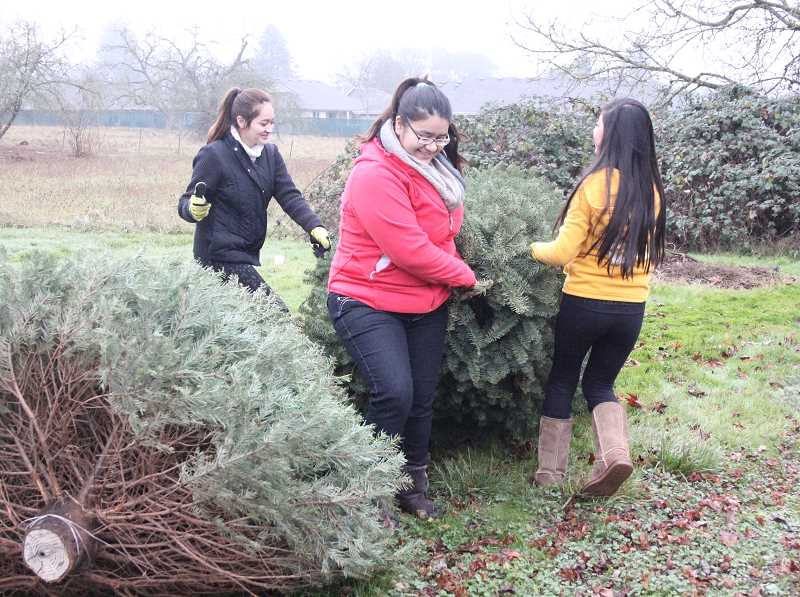 by: MAYGAN BECKERS - From left, Briana Arias, Gabriela Ramirez and America Perez, partner up to move Christmas trees at Woodburn Foursquare Church and haul them to Second Street's parking area for recycling.
