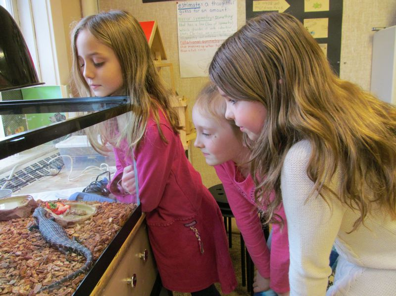 by: PHOTO BY ELLEN SPITALERI - Watching Billy, the blue-tongued skink, chow down on cat food are left to right, Cara, Avery and Sophia.