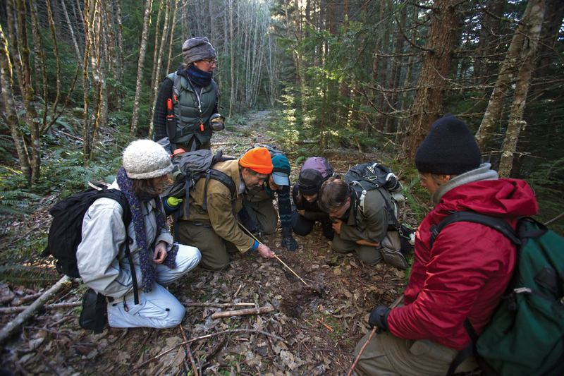 by: PAMPLIN MEDIA GROUP: JONATHAN HOUSE - Animal trackers from Cascadia Wild inspect a scrape on a trail that they believe to be either a bobcat or cougar in the Mount Hood Nartional Forest.