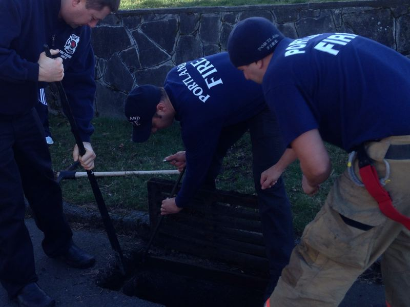 by: SUBMITTED PHOTO: PORTLAND FIRE & RESCUE - Firefighters use pry bars to remove the drain cover of an 80-pound grate in South Burlingame below which Bob the cat was stuck.