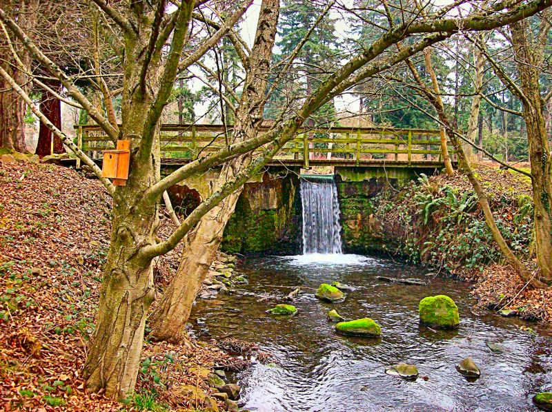 By: RITA A. LEONARD   The Dam At The Crystal Springs Rhododendron Garden Is