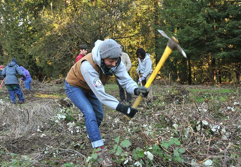 AmeriCorps volunteers take care of some serious business - clearing away blackberries - at Tryon farms workday on Martin Luther King Jr. Day.