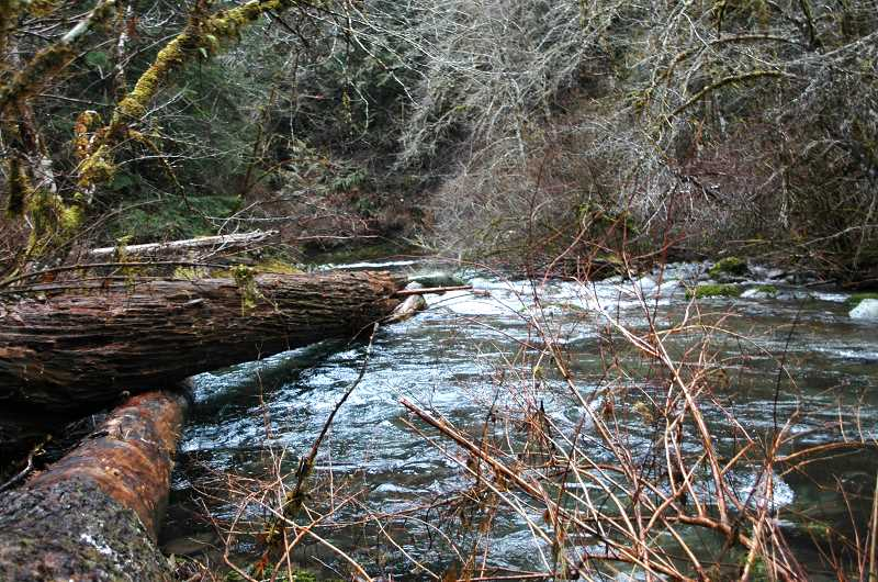 by:  ISABEL GAUTSCHI - This is one of four log structures that were placed along a nearly half-mile stretch of Eagle Creek in the Weyerhaeuser Columbia Timberlands in 2012 to improve stream health.