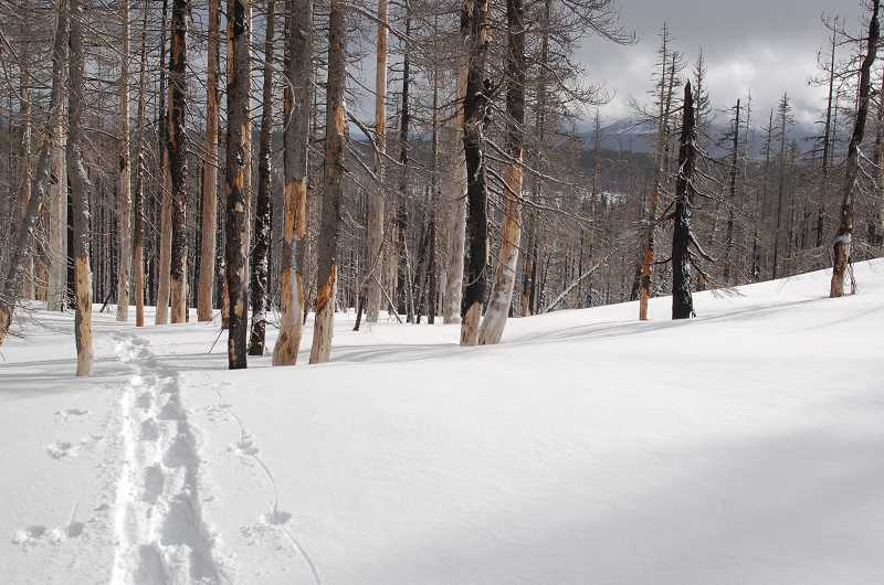 by: SCOTT STAATS SPECIAL TO THE CENTRAL OREGONIAN - A set of solitary showshoe tracks go through the wilderness in an area scarred by wildfire. Conditions can change quickly in the outdoors, especially in the winter months, so people should always be prepared prior to setting out on an outing.