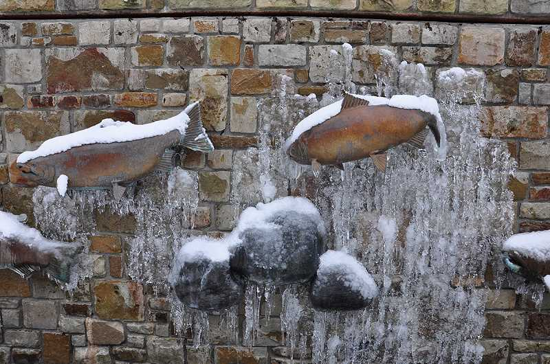 by: SUBMITTED PHOTO: CHERYL HILL - The fish in the fountain at West Linn Central Village look as though frozen in time Friday morning.