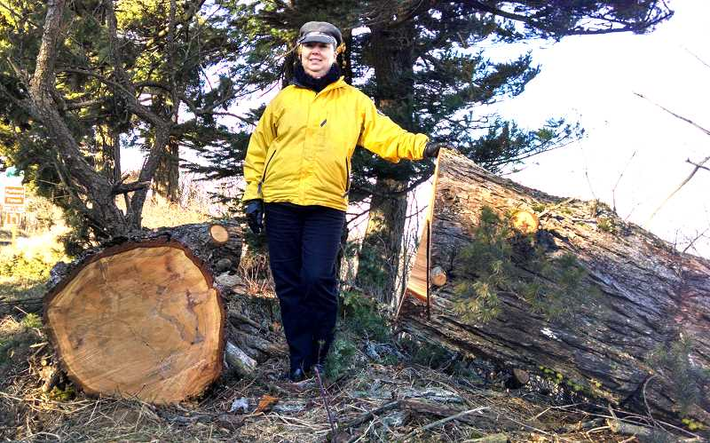 by: OUTLOOK PHOTO: CARI HACHMANN - Carnetta Boyd stands between a decades-old tree that fell victim to fierce East Winds off the historic highway in Corbett.