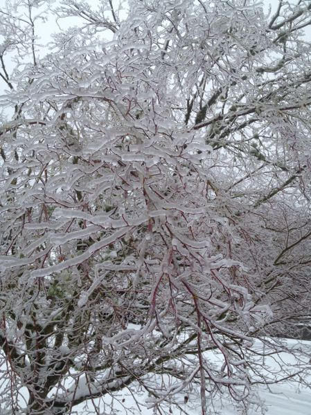 by: TRIBUNE PHOTO MARK GARBER - Thick ice coated trees and power lines in Gresham Sunday morning,