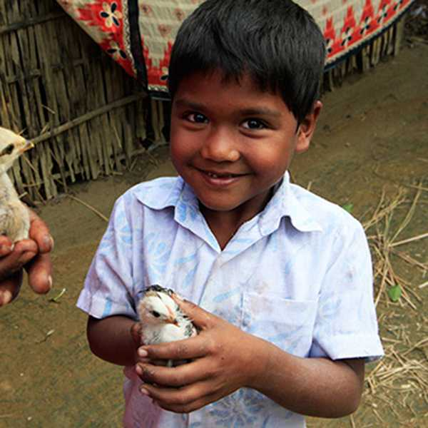 by: COURTESY PHOTO - Heifer International provides families across the world with poultry, cattle, goats, honey bees and other animals through donations.