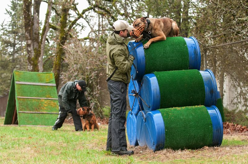 by: SPOKESMAN PHOTO: JOSH KULLA - Clackamas County Sheriff's Deputy Jeff Cameron and Vito climb an obstacle at the agency's K9 training ground in Clackamas. Oregon City Police Officer Bill Horton and Mac are in the background, part of a multi-agency training class headed by the CCSO.