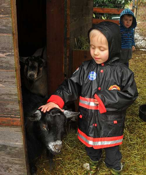 by: PAMPLIN MEDIA GROUP: VERN UYETAKE - Ryan Shumann Murrell, 5, helps take care of Friendship Farm's pygmy goats, Buzz and Whisper.