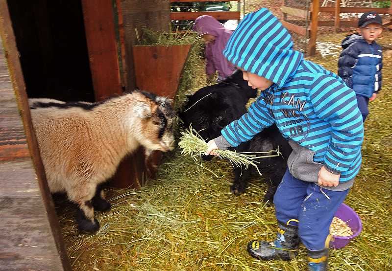 by: PAMPLIN MEDIA GROUP: VERN UYETAKE - Young farmer Caden Mueller, 4, offers Echo a handful of straw.