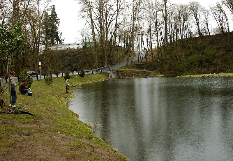 by: SUBMITTED PHOTO - Canby Pond, located in Canby Community Park, will be stocked with more than 1,000 trout for the Oregon Department of Fish and Wildlifes youth angling event April 5. ODFW staff and volunteers will be on hand to provide fishing gear and instruction to interested youngsters.