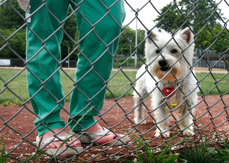 by: OUTLOOK FILE PHOTO - Gresham resident Conny Mottram took her dog Toby to the ball field at Main City Park so he could run off-leash, even though it was against city ordinances. With the opening of an official dog run at the park last week, now Toby can run all he wants.