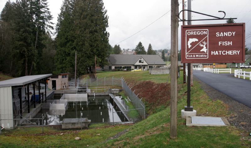 by: POST PHOTO: JIM CLARK - The Sandy Fish Hatchery is located just north of Sandy off Fish Hatchery Road.