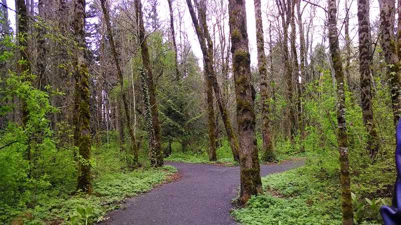 by: OUTLOOK PHOTO: CARI HACHMANN - Inside Fairview Woods.