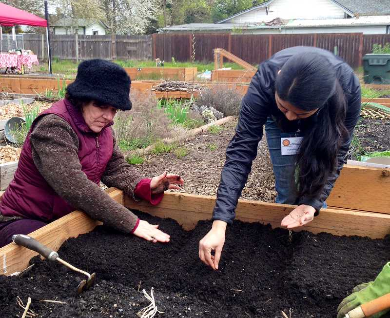 by: COURTESY PHOTO: VANESSA VANDOMELEN - Pukhraj Deol (right) of the OSU Extension Service demonstrates planting lettuce seeds in North Plains. Gaston resident Lydia Smith said the class made her all exhilarated with new seeds to grow.