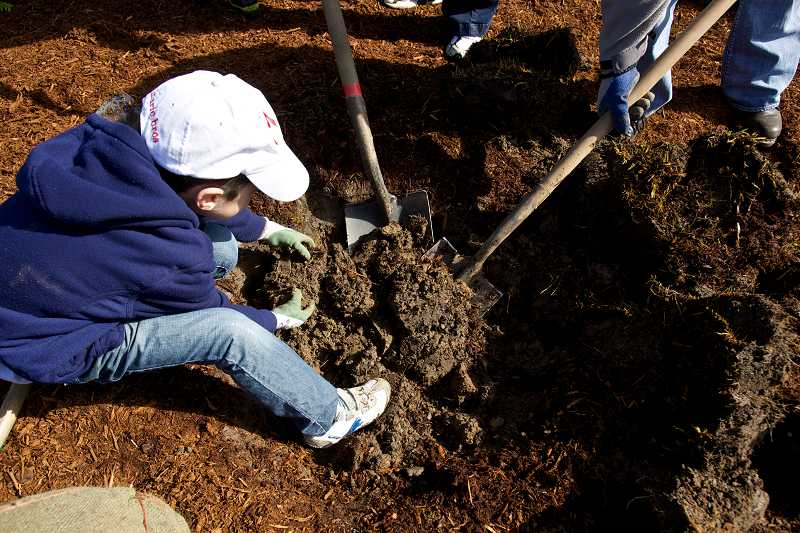by: TIMES PHOTO: JAIME VALDEZ - Luka Tomic, 7, helps his family plant a tree by removing handfuls of dirt from a hole during an Arbor Day in Southwest Beaverton.