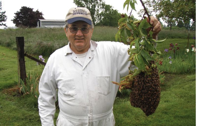 by: COURTESY OF THE TUALATIN VALLEY BEEKEEPERS ASSOCIATION - Jerry Maasdam of the Tualatin Valley Beekeepers Association collected a bee swarm in Washington County last spring without a veil or gloves. The group is warning people to avoid swatting bees if they see a swarm this spring.