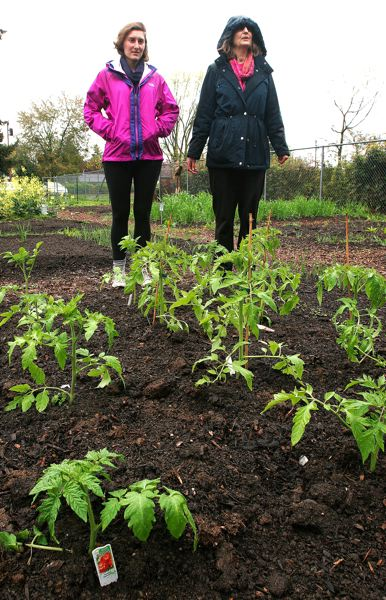 by: OUTLOOK PHOTO: JIM CLARK - Katrina Haller, left, and Jenny Holmes recently waked in the rain through the Sanctuary Community Garden on Northeast Glisan Street.