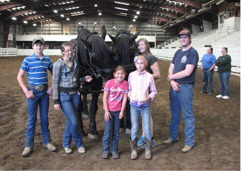 Working with draft horses in the fairgrounds arena are, from left, Jordan Bender, Kiturah Cloud, Lexee Whttenburg, Claire Bender, Catylynn Duff, and Jake Palin.