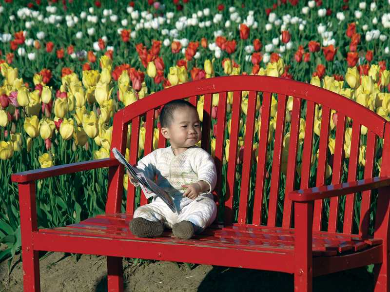 by: TYLER FRANCKE - A small child checks out the brochure and the tulip fields at Wooden Shoe Tulip Farm's Tulip Fest this year.