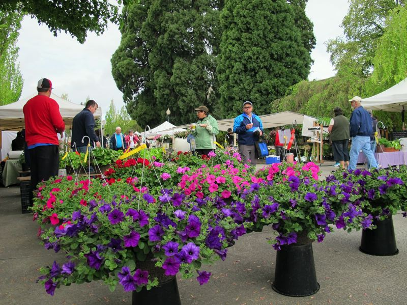 by: HILLSBORO TRIBUNE PHOTOS: KATHY FULLER - A large crowd turned out in downtown Hillsboro Saturday for the first farmers market of the season. Oregons liquid sunshine held off until after the market closed.