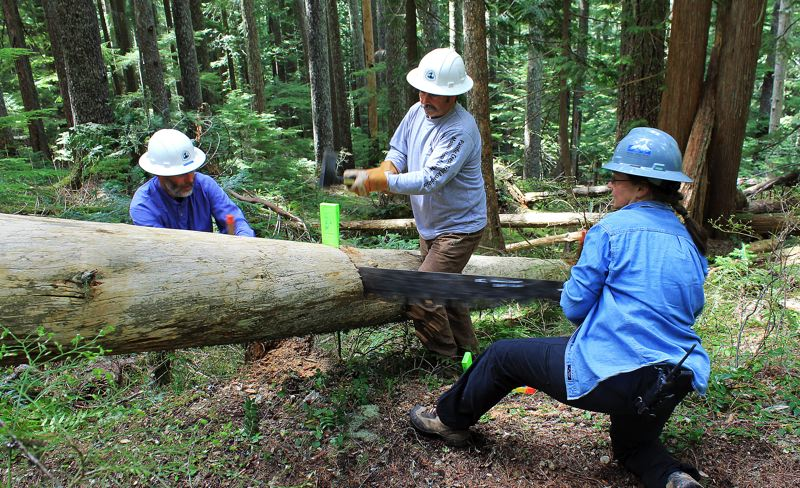 by: OUTLOOK PHOTO: CARI HACHMANN - Bill Hawley (center) drives a wedge into the cut Robert Caldwell (left) and Roberta Cobb (right) are making with a cross-cut saw.