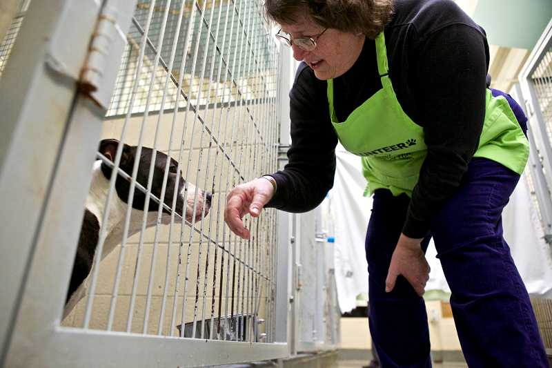 by: TIMES PHOTO: JAIME VALDEZ - Lorna McKim, a volunteer at the Bonnie L. Hayes Small Animal Shelter, says hello to Milo, a pit bull mix.