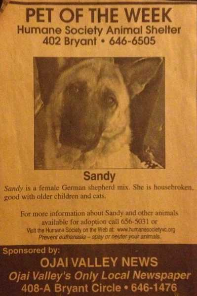 by: SUBMITTED PHOTO - Chris and Karen Sorenson adopted their beloved dog, Sandy, many years ago after seeing this photo in a Southern California newspaper.