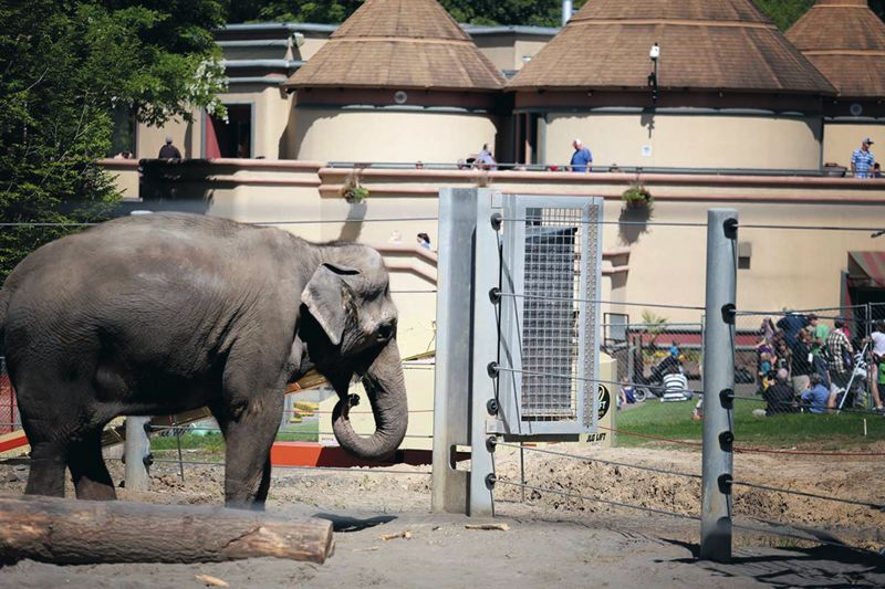 by: TRIBUNE PHOTO JONATHAN HOUSE - One of the Oegon Zoo elephants eats from a new feeder in an expanded of their habitat last week.