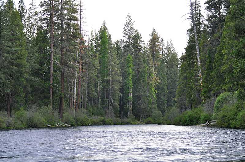 by: JESSICA NOACK - The Metolius River is wide and swift at Bridge 99, near Camp Sherman.