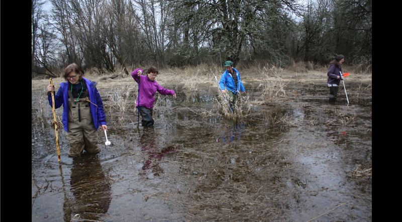 by: ROBIN JOHNSON - Jane Hartline, founder of the Sauvie Island Habitat Partnership, works with a crew of volunteers to survey amphibian egg masses in a Scappoose wetland. From left: Hartline, Shawn Looney, Daniel Evans and Lona Pierce