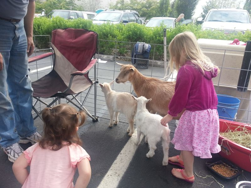 by: PHOTO COURTESY: JACKIE HAMMOND-WILLIAMS - Kids get to play with goats at the Oregon City Farmers Market, which is hosting a Householding Fair this weekend.