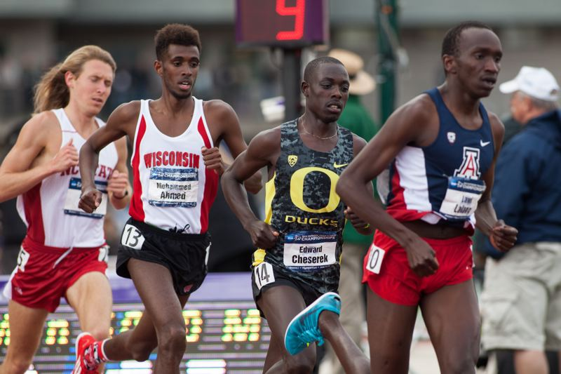 by: COURTESY OF MEG WILLIAMS - University of Oregon freshman Edward Cheserek (second from right) tucks in behind Arizonas Lawi Lalang during the NCAA 5,000-meter run last week at Hayward Field. Chesereks runner-up finish, after a victory in the 10,000, helped the Ducks roll to the NCAA Division I mens track and field team championship.