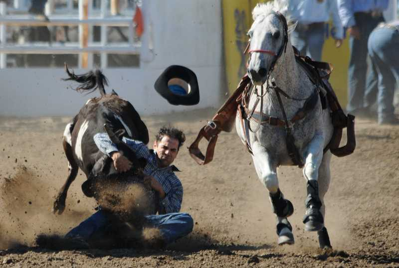 by: LON AUSTIN/CENTRAL OREGONIAN - A steer wrestler competes in the Friday morning slack performance last year at the Crooked River Roundup. This year's roundup has a record number of entries which are expected to include several past and current world champions. The Roundup begins with a slack performance at 11 a.m. Friday and concludes with Sunday's final performance which begins at 2 p.m.