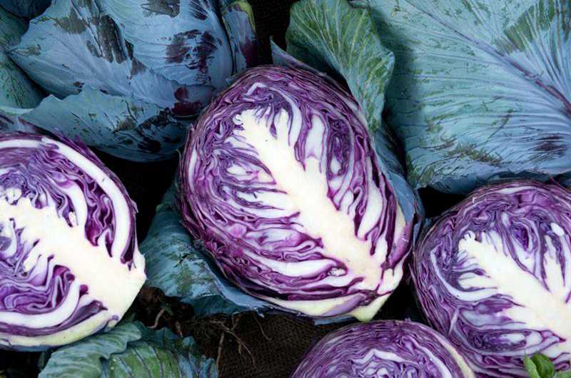 by: COURTESY PHOTO: LYNN KETCHUM - Plant cabbage in June or July for a late-season harvest.