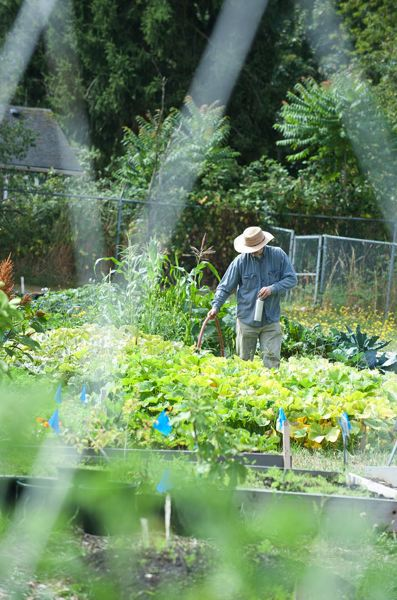 by: LYNN KETCHUM, COURTESY OF OSU EXTENSION - Watering during the early morning has several advantages for your gardens, and will save water resources.