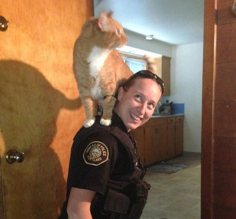 by: PORTLAND POLICE BUREAU - A burlary victim's cat help police search for suspects.