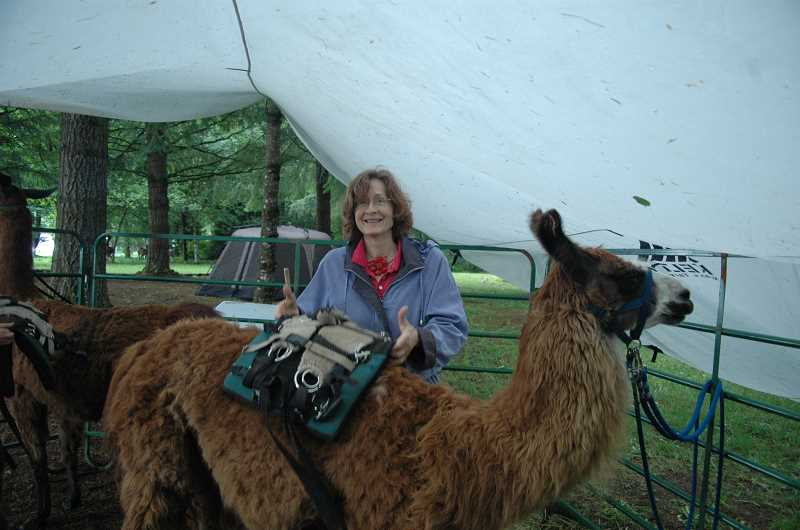 by: ISABEL GAUTSCHI - Kate Owen of Beaverton smiles as she puts her knowledge of putting a pack on a llama to the test as Diamond stands patiently. Diamond belongs to Debra Langley-Boyer, who traveled from Washington to attend the annual Back Country Llama Rendezvous and Drive-In at Hidden Oaks Llama Ranch in Estacada and Milo McIver State Park.