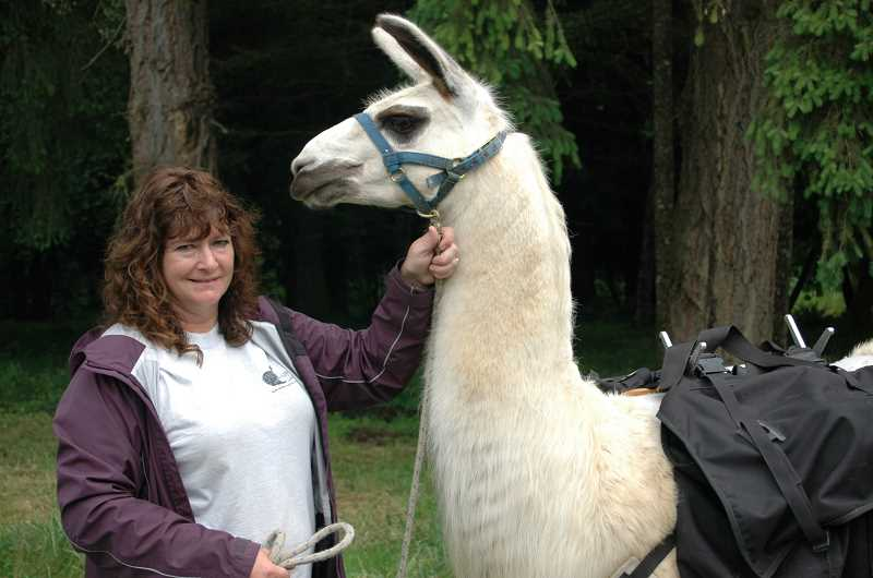 by:  ISABEL GAUTSCHI - Sherri Tallmon, owner of Hidden Oaks Llama Ranch, stands with Jack, a 6-year-old llama. Jack is carrying 46 pounds. According to a pamphlet for the event distributed by Debra Langley-Boyer, adult llamas typically weigh 250-400 pounds. They may carry a quarter of their body weight or up to a third for short, easy trails.