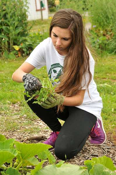 by: REVIEW PHOTO: VERN UYETAKE - Lindsey Paldino, a senior at Lakeridge High School, works on weeding one of the vegetable beds at Luscher Farm last week.