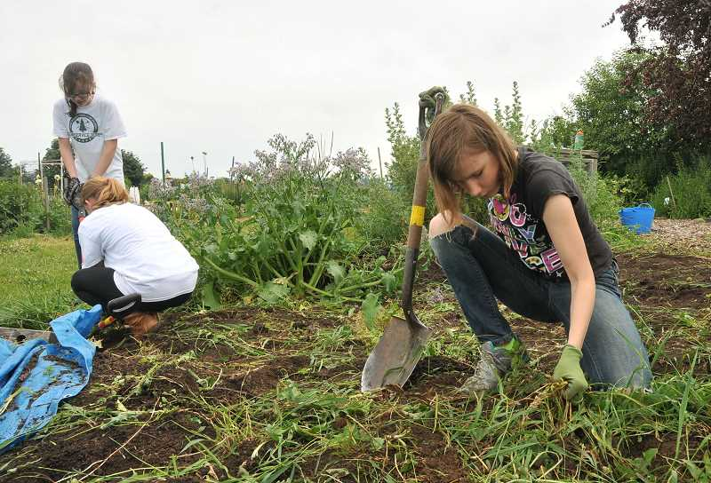 by: REVIEW PHOTO: VERN UYETAKE - Olivia Corvelli, left, and Olivia Testa of Teen Service Corps apply their muscles to working on gardens at Luscher Farm.
