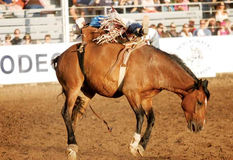 by: PHIL HAWKINS - The 79th annual St. Paul Rodeo, which was held from July 1-5, saw attendance numbers reach beyond 47,000, coming close to the events record.