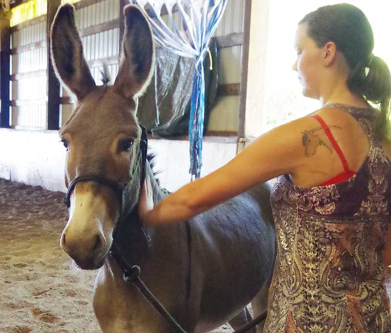 by: NEWS-TIMES PHOTOS: JILL REHKOPF SMITH - Heather Longshore of Gaston works with Bugs to ready him for the adoption event this Sunday, July 13. In the past few days, she said, the donkey has warmed up to her and let her touch him.