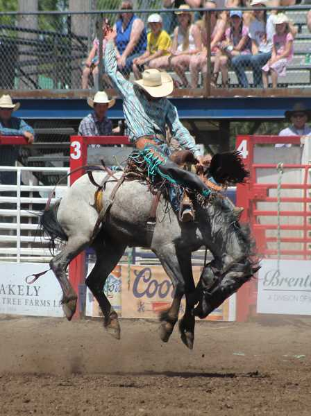 by: JIM BESEDA/MOLALLA PIONEER - Australia's Andrew Steiger strikes the classic rodeo pose aboard Big Bend Rodeo's Blue Rose at Friday's 91st Molalla Buckeroo PRCA Rodeo.