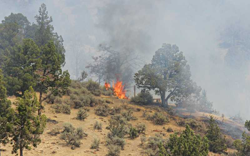 by: JEFF WILSON - Fire torches a tree on the hill above Juniper Hills Park on Saturday.