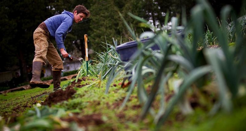 by: TRIBUNE FILE PHOTO: CHRISTOPHER ONSTOTT  - Sara Cogan harvest winter vegetables at Zenger Farms. The urban farm is adding a new grange hall.